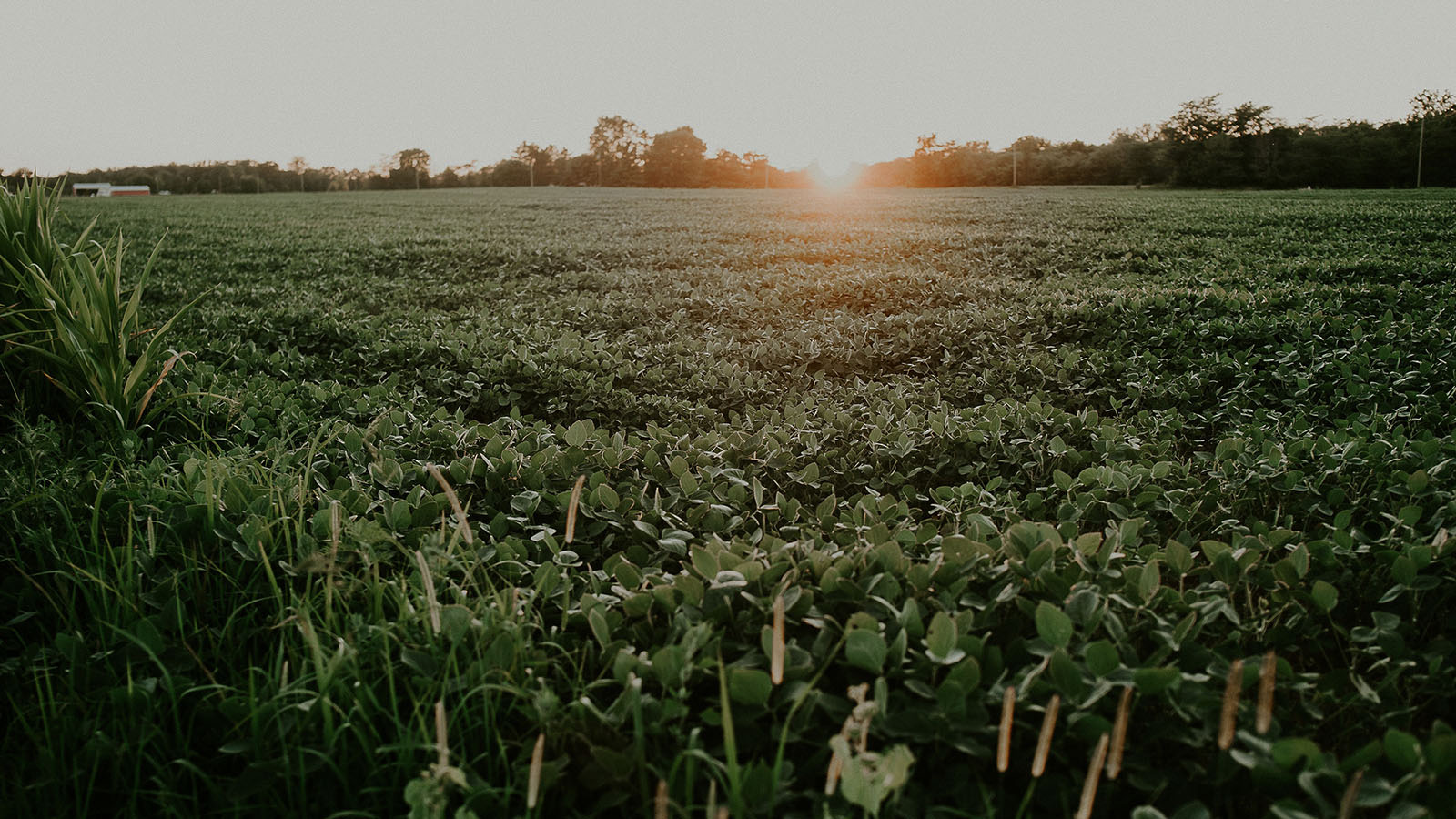 How Is the Brazil Soybean Cash Market Structured during the 2021 Harvest?