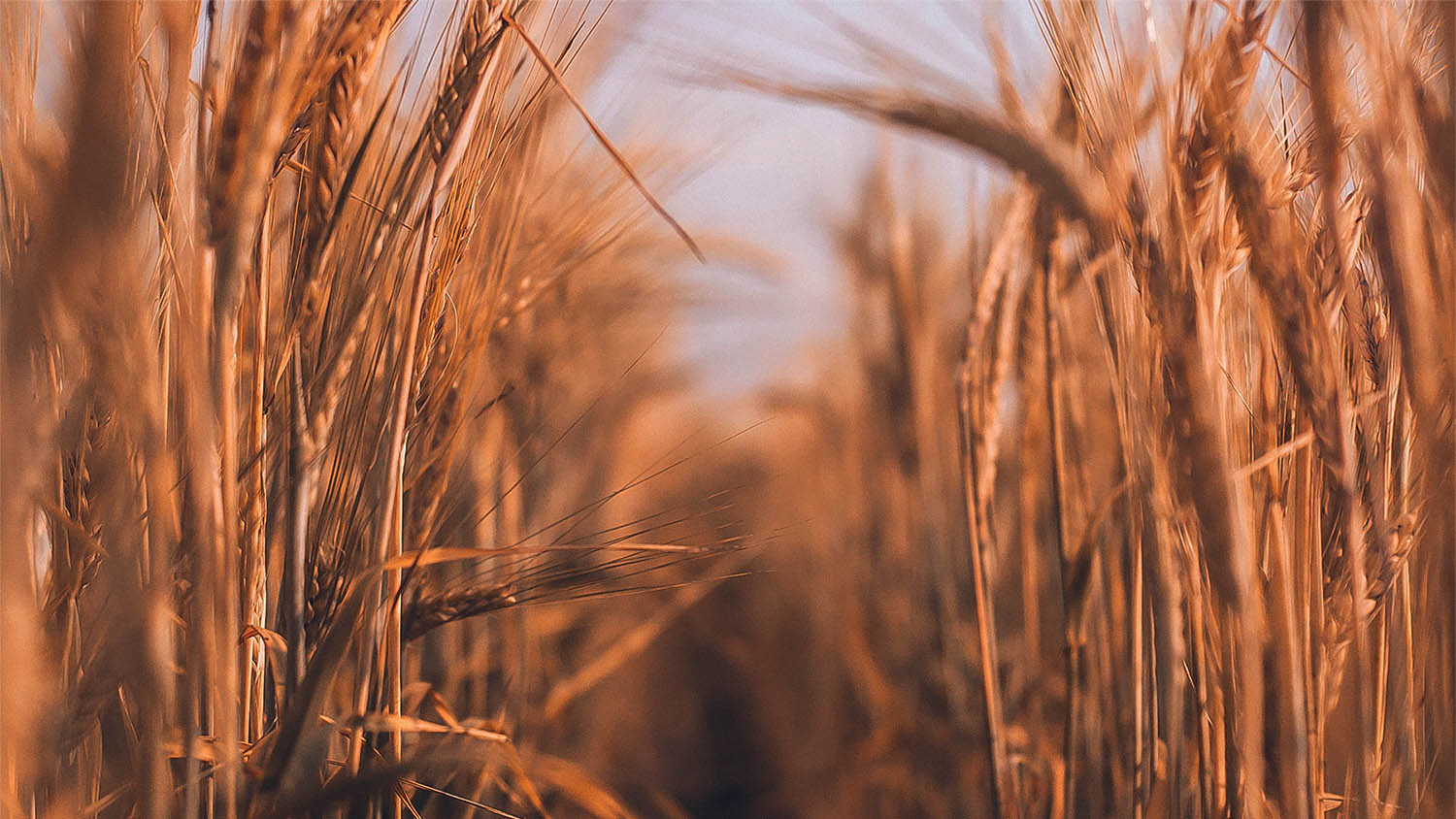 Black Sea wheat moved lower again but global benchmarks are on the rise