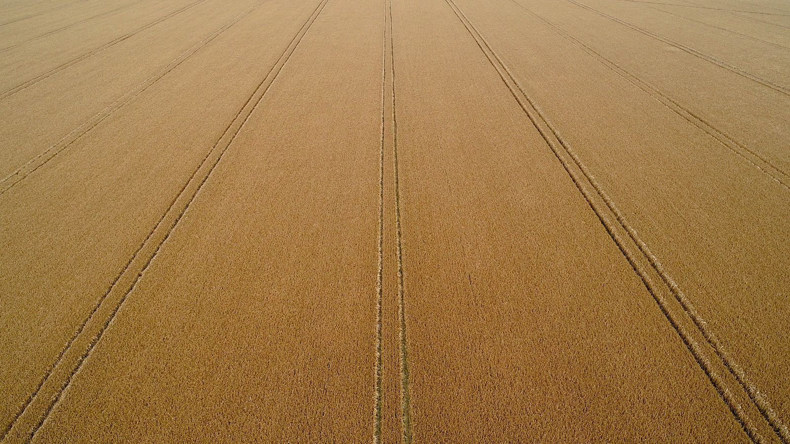 Russian Wheat Getting Cheaper On Record-High On-Farm Stocks. Will This Convert Into Aggressive Exports In 21/22?