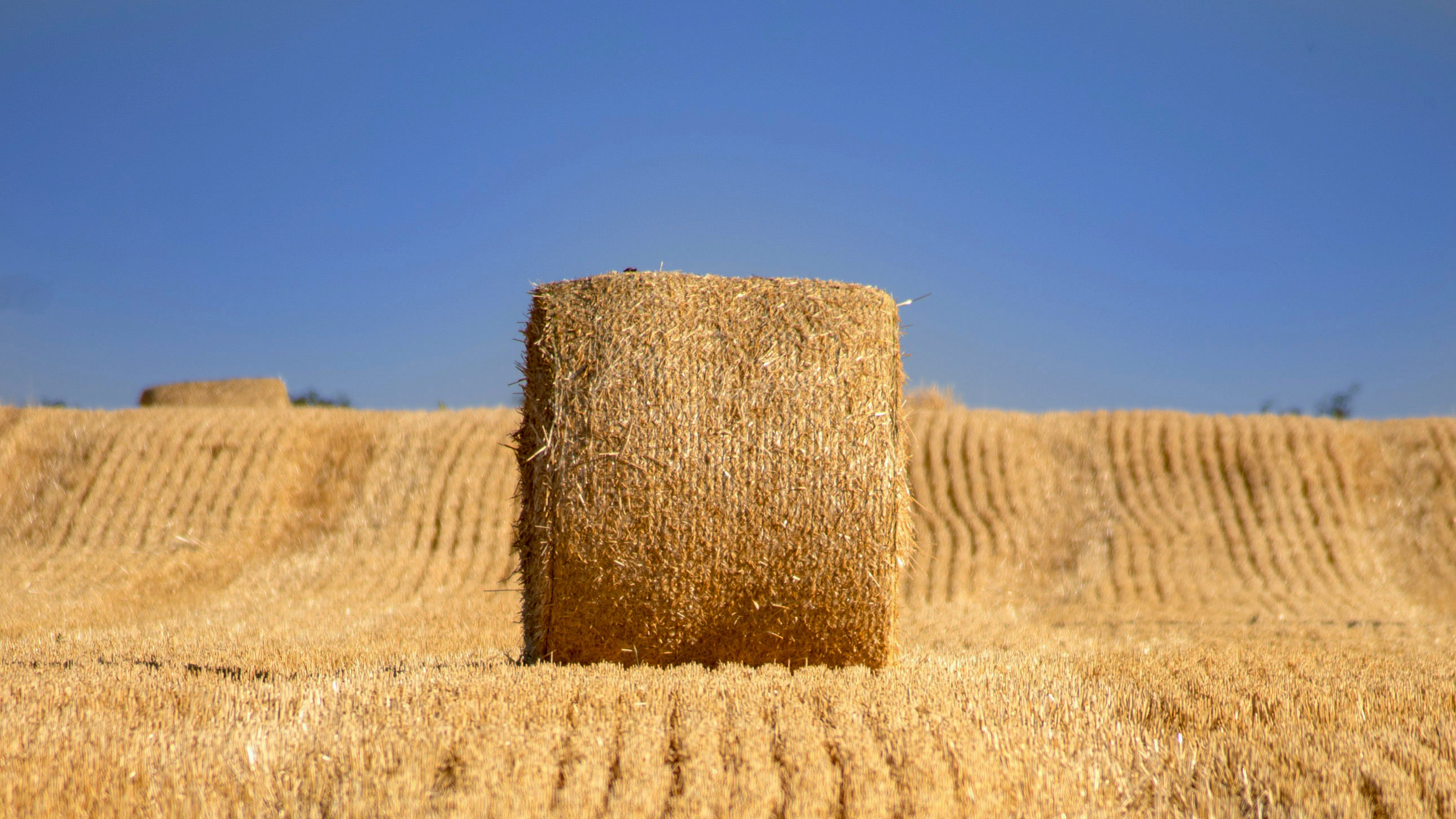Black Sea and French Wheat: Why Quality Matters