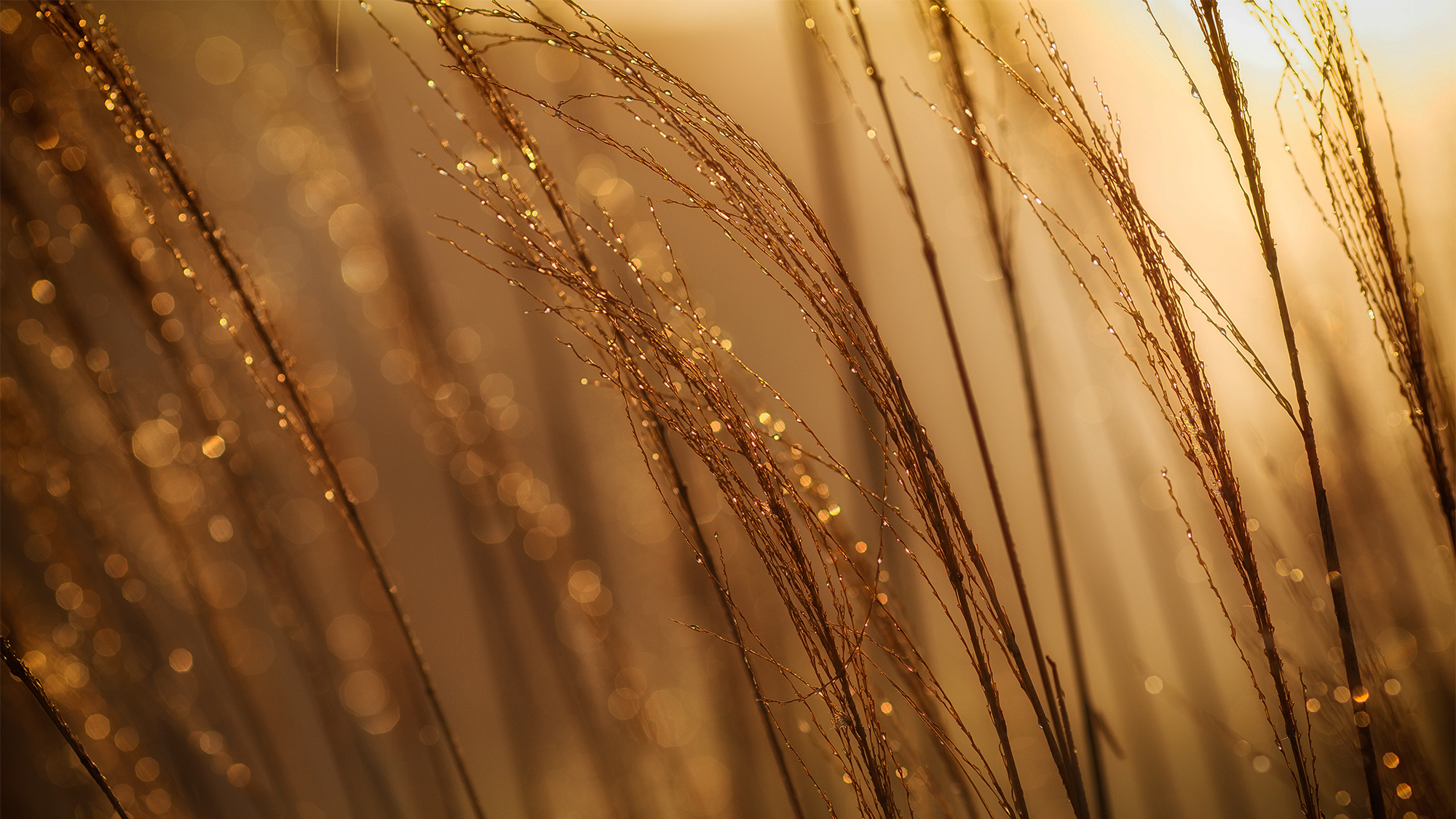 Black Sea wheat price rallied after WASDE