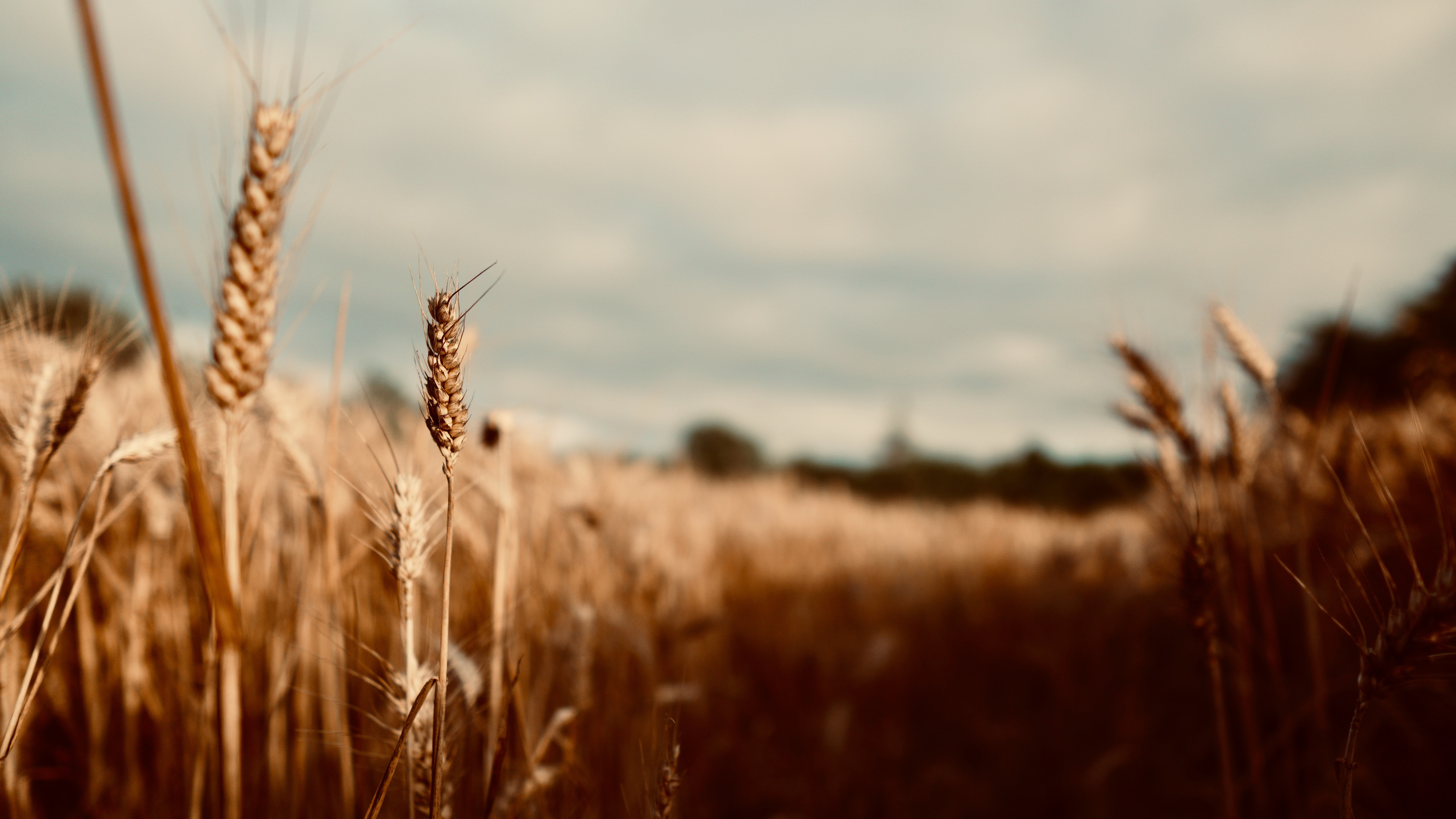 Russian wheat prices push higher again supported by export tax